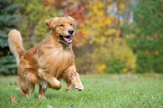 狗狗喜欢你有哪些表现