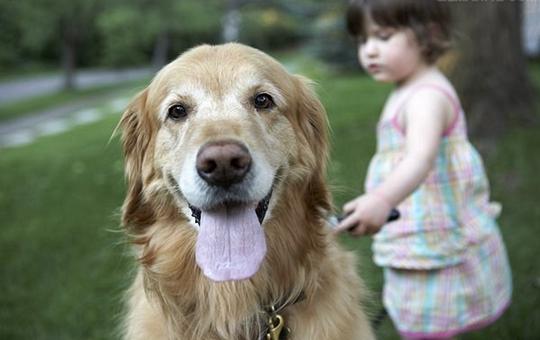 如何分辨狗狗是否喜欢自己
